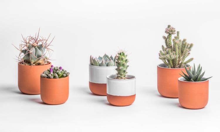 PRICK Cactus Pots-2