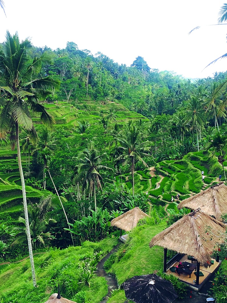 Tegallalong Rice Terraces