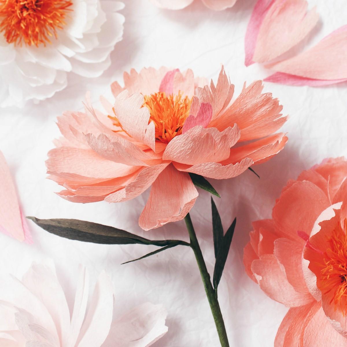 Pretty paper petals